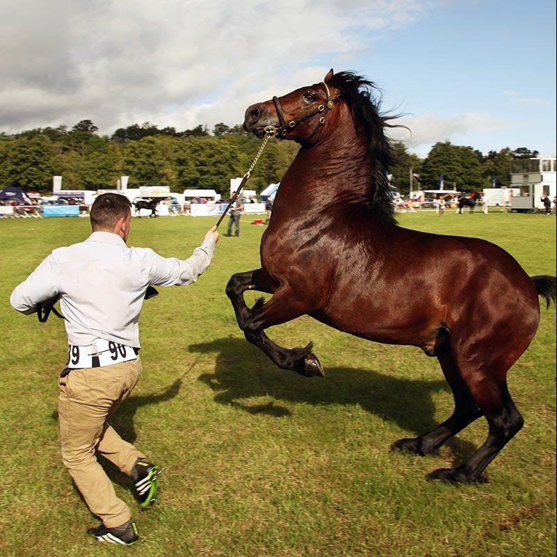 Usk Show Exhibitors Horses Show Classes