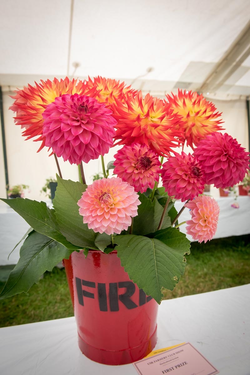 Horticulture | Usk Show